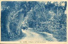 006325  St-Eugène - La Vallée Des Consuls  1922 - Algerien