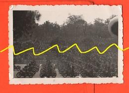 Bersaglieri Parata Su MOTO GUZZI Regio Esercito 1936 - Guerre, Militaire