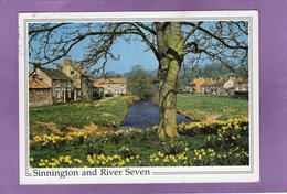 Sinnington And River Seven - Angleterre