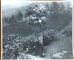 Sri Lanka Homme Fermier Porte Des Navets En Haut Agriculture Village Mountagnes Mountains Farmer - Anonymous Persons
