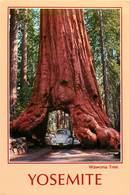 CPSM Yosemite                   L2789 - Yosemite