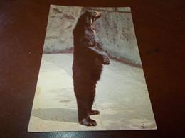 B717  Orso Non Viaggiata - Orsi
