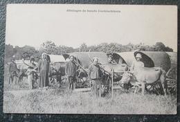 Indochine  Attelages De Boeufs Cochinchinois Cpa - Viêt-Nam