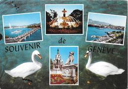 Souvenir De GENEVE - Cygnes - GE Genève