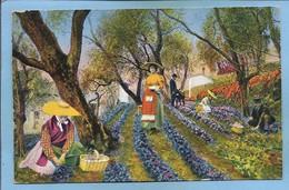 Grasse (06) Cueillette Des Violettes Cliché De La Parfumerie Bruno-Court 2 Scans 1960 (envoyée Par Mme Balsat à Dicy 89) - Grasse