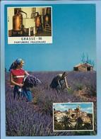 Grasse (06) Vieille Ville Jardin Des Plantes Distillation De La Lavande à La Parfumerie Fragonard 2 Scans - Grasse