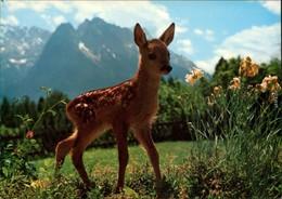 Ansichtskarte  Rehkitz Mit Bergpanorama 1999 - Tierwelt & Fauna