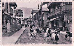 Zermatt, La Rentrée Des Chèvres (7798) - VS Valais
