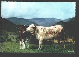 Les Vogues Pittoresques - Tendresses - Kuh / Vache / Cow / Koe - Vaches