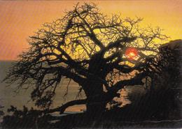 CPA AFRIQUE EN COULEURS Coucher De Soleil Circulée Sénégal 1984 - Cartes Postales