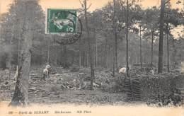 91 - Essonne / Forêt De Sénart - 911849 - Bûcherons - France