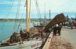 (91)  CPA  Matane Que  Transport Du Bois  Le Port 1972  (Bon  état) - Autres