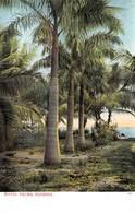A-19-2547 : ROYAL PALMS. FLORIDA. - Etats-Unis