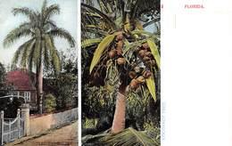 A-19-2548 :COCOANUT TREE.. FLORIDA. - Etats-Unis