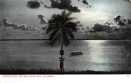 A-19-2554 :  MOOLIGHT ON BISCAYNE BAY. FLORIDA. - Etats-Unis