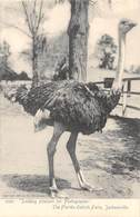 A-19-2564 :  AUTRUCHES. . OSTRICHES. LOOKING PLEASANT FOR PHOTOGRAPHER. THE FLORIDA OSTRICH FARM JACKSONVILLE - Jacksonville