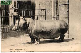HIPPOPOTAME   REF 59128A - Hippopotames