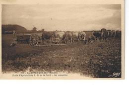 85 - LA MOTHE ACHARD - T.Belle Vue Animée De L'Ecole D'Agriculture N.D. De La Forêt - Les Semailles -  Boeufs Au Labour - La Mothe Achard