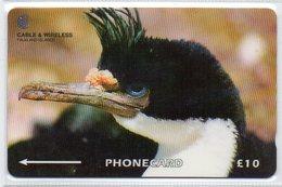 10 POUNDS - KING CORMORANT - Falkland Islands