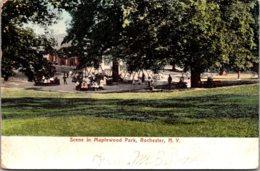 New York Rochester Scene In Maplewood Park 1906 - Rochester