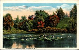 New York Rochester Maplewood Park Lily Pond 1916 - Rochester