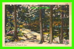 ST-DOMINIQUE, QUÉBEC - CHEMIN DANS LE SOUS BOIS - CIRCULÉE EN 1952 - - Quebec