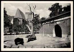 ÄLTERE POSTKARTE BERLIN BÄRENZWINGER Propaganda DDR Es Lebe [...] Das Lager Des Friedens Der Demokratie Bär Ours Bear AK - Mitte