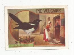 Chromo, Animaux ,oiseau, PIE VULGAIRE , PICA RUSTICA - Autres