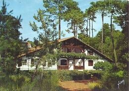 LANDES - 40 - CPSM GF Couleur - Villa Landaise Dans La Foret De Pins - Mimizan