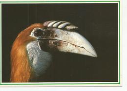 CP CALLAO PAPOU (photo JM Dupuyoo) Jardins D'oiseaux Tropicaux - Oiseaux