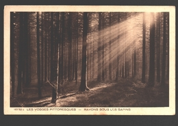 Les Vosges Pittoresques - Rayons Sous Les Sapins - France