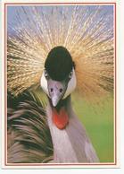 CP GRUE COURONNEE Prise De Face (photo Jacana) Jardins D'oiseaux Tropicaux - Uccelli