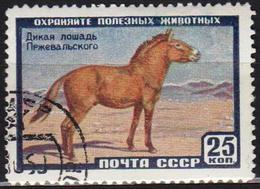 USSR 1959 1 V Used Przewalski Wild Horse Horses Horse Chevaux Cheval - Cavalli