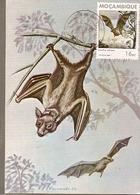 Mozambique & Mammals Of Mozambique, Bat, Eidolon Helvum, Kerr, Maputo 1988 (1792) - Mozambique