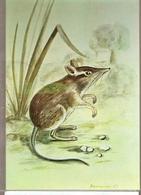 Mozambique ** & Mammals Of Mozambique, Rodent, Petrodromus Tetradactylus, Poters 1983 (1846) - Mozambique