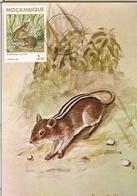 Mozambique & Mammals Of Mozambique, Rodent, Rhabdomys Pumilio, Sparrman, Maputo 1983 (1784) - Mozambique
