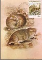 Mozambique & Mammals Of Mozambique, Rodent, Cryptomys Hottentotus, Gray,  Maputo 1988 (1864) - Mozambique