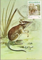 Mozambique & Mammals Of Mozambique, Rodent, Petrodromus Tetradactylus, Poters, Maputo 1988 (1846) - Mozambique