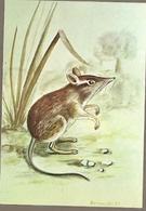 Mozambique & Mammals Of Mozambique, Rodent, Petrodromus Tetradactylus, Poters, Tete 1983 (1846) - Mozambique