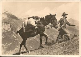 """ALPINI - """" Fedele Compagno """"  - FORMATO GRANDE - VIAGGIATA - (rif. F43) - Regiments"""