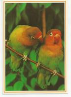 CP INSEPARABLES DE FISCHER (photo Jacana) Jardins D'oiseaux Tropicaux - Uccelli