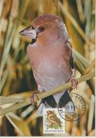 Belgique Carte Maximum 1985 Oiseaux Buzin Gros-bec 2186 - 1981-1990