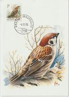 Belgique Carte Maximum 1989 Oiseaux Buzin Moineau 2348 - Cartes-maximum (CM)