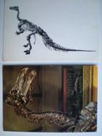 Belgique >Hainaut > Bernissart Iguanodon Dinosaure - Bernissart