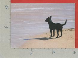 CARTOLINA VG AUSTRALIA - SIDNEY - It's A Dog Life - 10 X 15 - ANN. 1989 - Sydney