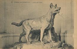 Loup Wolf  Chateau De Chantilly Loup Par Cain - Animales