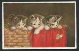 11444  CPA  Chatons Dans Un Panier Avec Papillon - Katten
