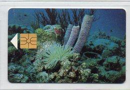 BONAIRE  - 60 UNITS - TELFONIA BONAIRIANO N.V. - Antilles (Netherlands)