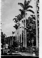 ILE DE LA REUNION - SAINT DENIS - Palmiers Bleus Du Jardin Colonial - Saint Pierre