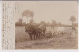 CARTE PHOTO : UNE MOISSONNEUSE LIEUSE - FAUCHAGE ET LIAGE - GERBES DE BLE - ECRITE EN 1902 - 2 SCANS - - Cultures